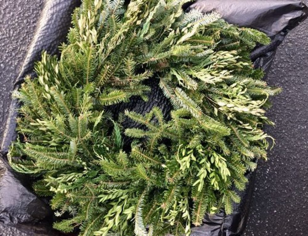 Wreaths Sold by Boy Scout Troop 399 Test Positive for Boxwood Blight