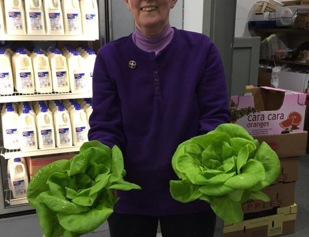 Healthy Harvest Program Delivers Fresh Bibb Lettuce